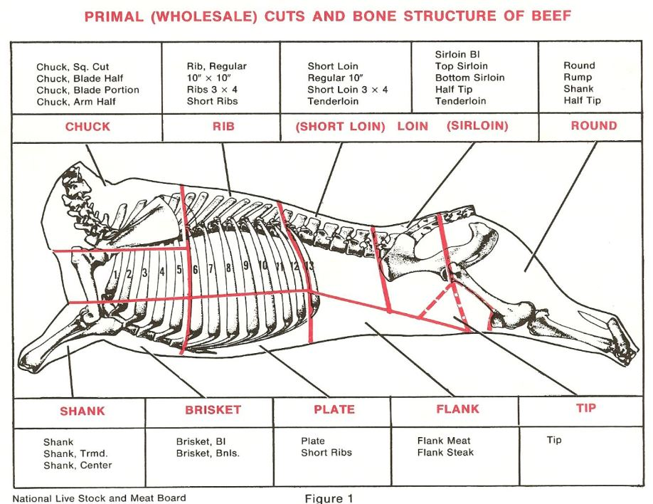 primal cuts and bone structure of beef
